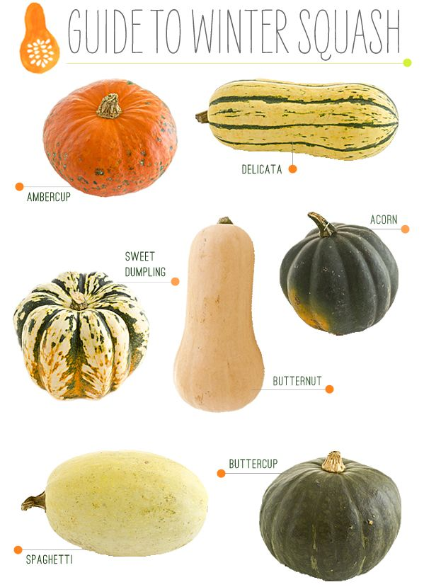 A guide to fall winter squash garnish gather blog for Fall cooking tips