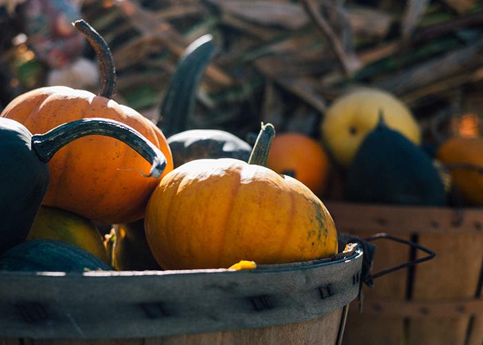 go pick a pumpkin garnish gather blog
